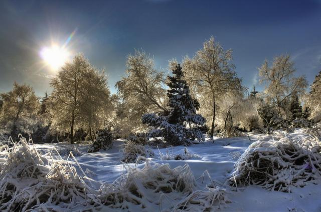 Winterwald im Erzgebirge in Sachsen