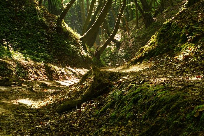 Hohlweg im Kraichgau - ideales Zuhause für viele Pflanzen und Tiere
