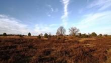 Landschaft in der Lüneburger Heide